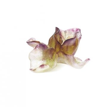 IRIS VIOLET FLOWER